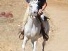 Me on Presto, full gallop; pic by Simona Serdiuc